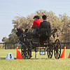 Welsh Cob in Intermediate Pony class driven by Sybil Humphries of Rapidan, Virginia