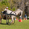 "Fjord pony ""Winona"" driven by Vivian Creigh of Vermont"