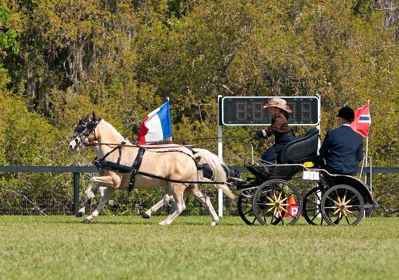Welsh pony pair driven by Meghan Benge of Windsor, SC