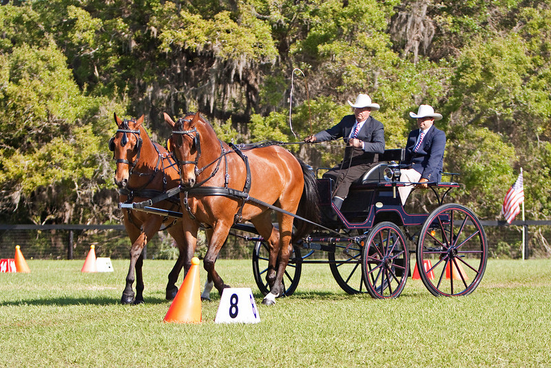 Bib Giles of Morriston, Florida drives a Hanoverian Intermediate Pair.