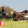 Dartmoor pony pair driven by Michelle Walters of Eads, Tennessee.