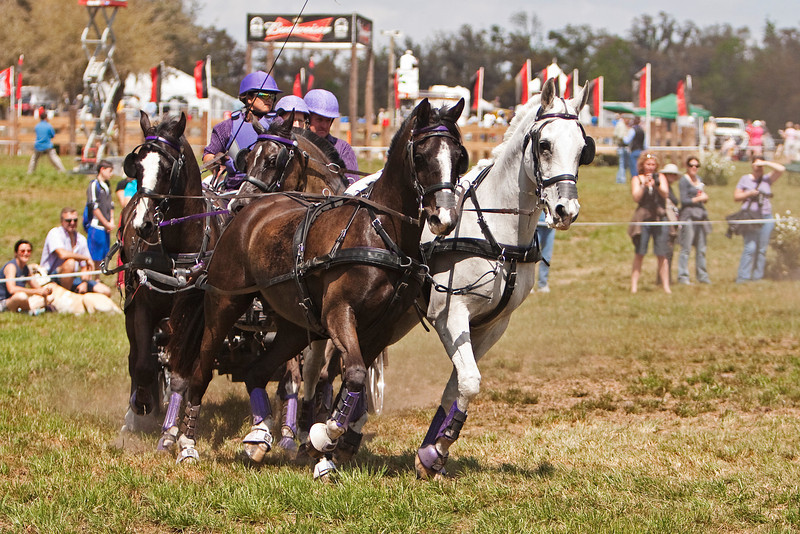 Wendy Ying of Bonifay, Florida drives Four-In-Hand of Sport Cobb horses