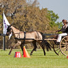 Morgan pony driven by Mary Mott-Kocsis of Baptistown, New Jersey