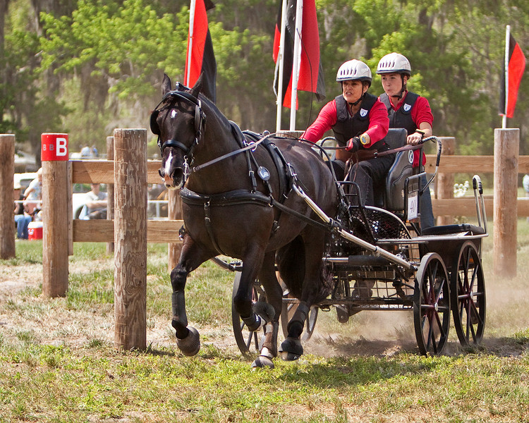 Sport Pony driven by Phylllis Grupe of Stockton, CA