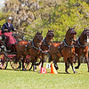 Chester Weber drives Four-In-Hand of Dutch Warm Bloods.
