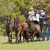 Park drag with Four-In-Hand Friesian horses display high class.