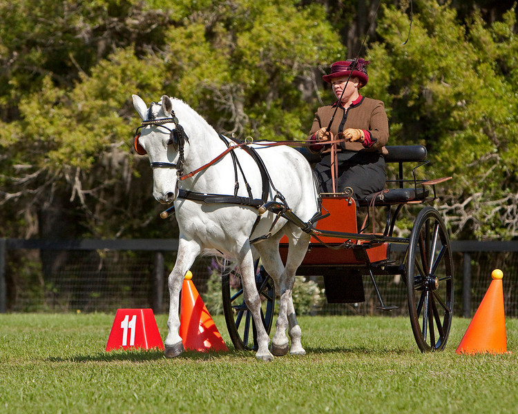 Connemara pony driven by Janelle Marshall from Australia