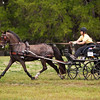 Morgan Pony driven by Suzy Stafford of Bear Delaware.
