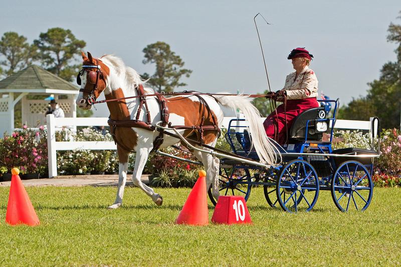 Judy Fryer of Sarasota Florida with her flashy Arab/Saddlebred cross