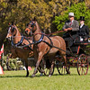 Welsh Cob Pony Pair driven by Paul Martin Jr. of New Holland, Pennsylvania