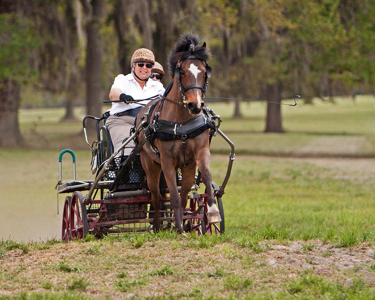 Welsh Cobb pony driven by Dale Gorvus of Forest City, NC.