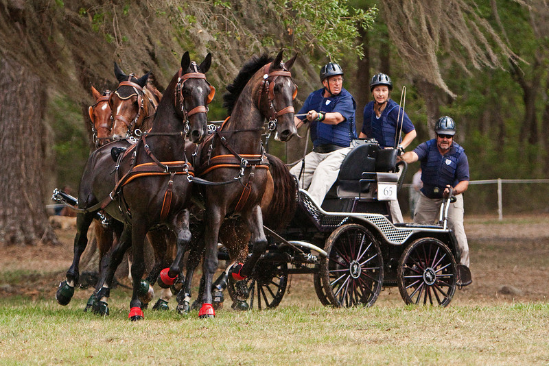 Darryl Billing of Wallenstein, Canada drives Dutch Warmblood Four-In-Hand team