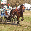 Olaf Larsson of Sweden drives Dutch (KWPN) single horse.