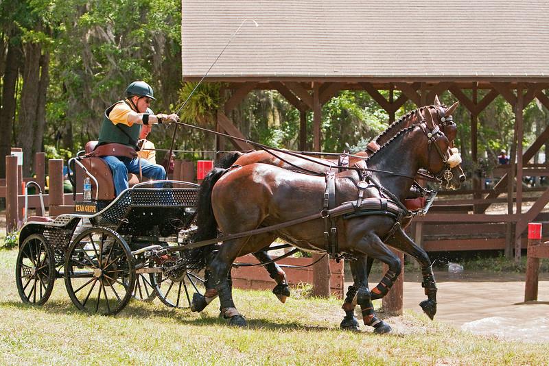 Fritz Grupe of Stockton, California drives Dutch (KWPN) pair.