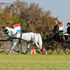 Lipizzaner pair driven by Rae Fischer of Listowel, Canada