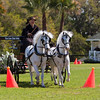 Welsh Pony pair driven by Claire Reid of Southern Pines, SC