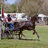 Dutch horse driven by Scott Adcox of Sarasota, Florida.