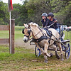 Fjord pony driven by Vivian Creigh of Springfield, VT