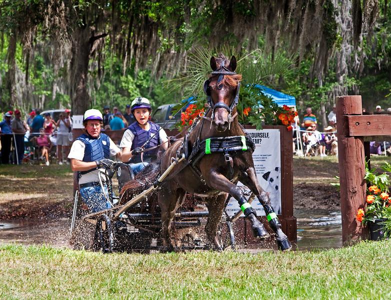 Morgan horse driven by Jan Jan Hamilton of Alva, Florida.