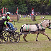 Fjord pony driven by Maggie Sullivan of Guilford, Connecticutt.