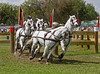 Connemara pony team driven by Allison Stroud.
