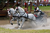 Lipizzaner pair driven by Rae Fischer of Ontario, Canada