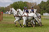 Connemara pony team driven by Allison Stroud.