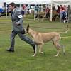 Great Dane Best of Breed 07 10 2010-10