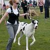 Great Dane Winners Dog 07 10 2010-04