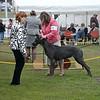 Great Dane Bitch 07 10 2010-05