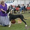 Great Dane Bitch 07 10 2010-07