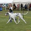 Great Dane Winners Dog 07 10 2010-03