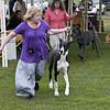 Great Dane Bitch 07 10 2010-02