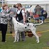 Great Dane Winners Dog 07 10 2010-02