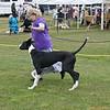Great Dane Bitch 07 10 2010-04