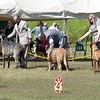 Hound Group 07 11 2010-01