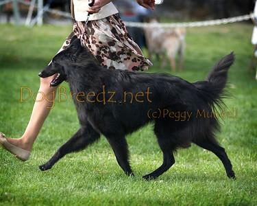 2014 OEDC - Belgian Sheepdog