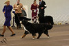 IMG_9160- CH Ahquabi's Dancer of Doriath