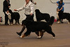 IMG_1269- GCH Greenway's Test Of Time