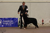 IMG_1296- GCH Wingfield's Lasso The Moon
