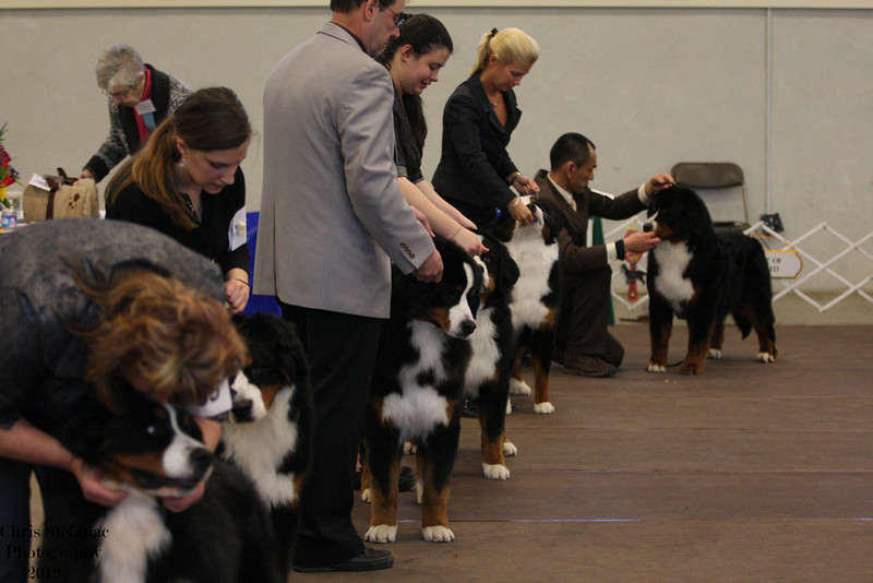 IMG_9841- Best Puppy in Sweepstakes Line Up