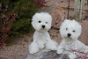 1&2_0370_WHWTrr_WB_PAW
