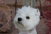 1_0379_WHWTrr_WB_PAW