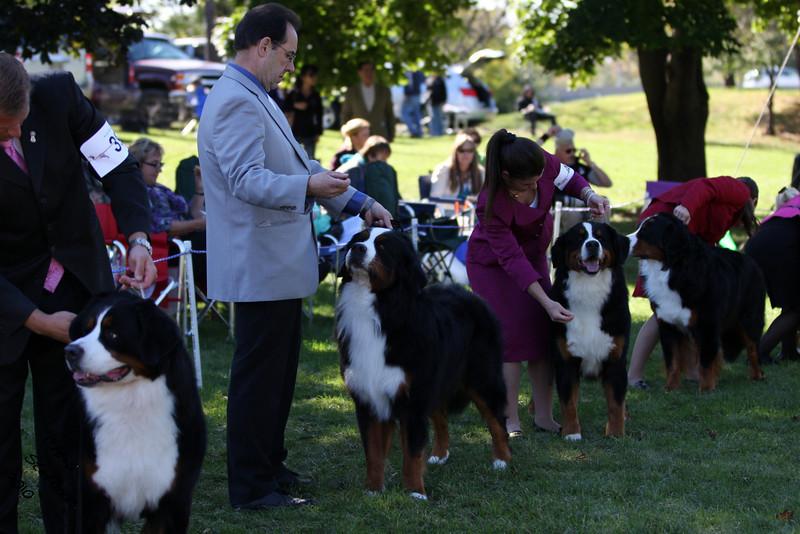 IMG_6174- Open Dogs