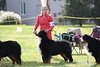 IMG_8820- GCH Avatar's Try Try Again