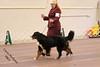 IMG_8187- Starkenhund Heluva Knight At Witrin