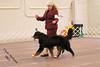 IMG_8185- Starkenhund Heluva Knight At Witrin