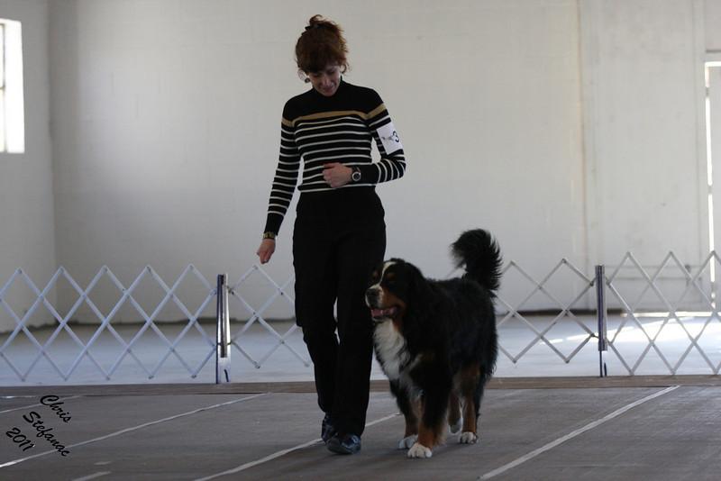 IMG_7973- Vilma & CH Starkenhund Feelin That Morning Buzz CDX RE