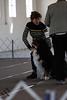 IMG_7975- Vilma & CH Starkenhund Feelin That Morning Buzz CDX RE