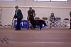 IMG_5773- Lord Fairfax Bear RE